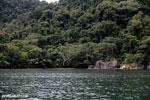 Rainforest on Nosy Mangabe [madagascar_maroantsetra_0027]