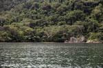 Rainforest on Nosy Mangabe [madagascar_maroantsetra_0028]