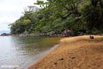 Beach on Nosy Mangabe [madagascar_maroantsetra_0036]