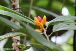 Flower or fruit in Madagascar