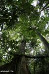 Nosy Mangabe rainforest [madagascar_maroantsetra_0112]