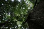 Nosy Mangabe rainforest [madagascar_maroantsetra_0114]