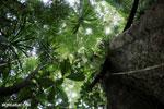 Nosy Mangabe rainforest [madagascar_maroantsetra_0115]