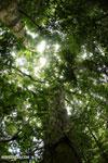 Nosy Mangabe rainforest [madagascar_maroantsetra_0126]