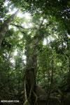 Nosy Mangabe rainforest [madagascar_maroantsetra_0128]
