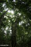 Nosy Mangabe rainforest [madagascar_maroantsetra_0129]