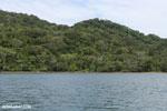 Rainforest on Nosy Mangabe [madagascar_maroantsetra_0217]