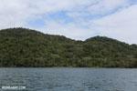 Rainforest on Nosy Mangabe [madagascar_maroantsetra_0219]