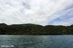 Rainforest on Nosy Mangabe [madagascar_maroantsetra_0220]