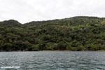 Rainforest on Nosy Mangabe [madagascar_maroantsetra_0223]