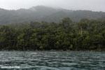 Rainforest on the Masoala Peninsula as seen from the Bay of Antongil
