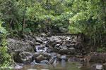 Creek on the Masoala Peninsula