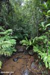 Creek on the Masoala Peninsula [madagascar_masoala_0048]
