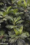 Plants [madagascar_masoala_0070]
