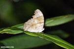 Butterfly [madagascar_masoala_0089]