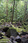 Masoala rainforest