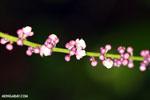 Flowers [madagascar_masoala_0145]