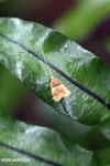 Moth [madagascar_masoala_0153]