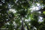 Masoala rainforest [madagascar_masoala_0198]