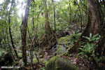 Masoala rainforest [madagascar_masoala_0224]