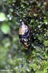Insect [madagascar_masoala_0234]