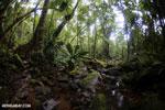 Madagascar rainforest [madagascar_masoala_0343]