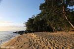 Masoala beach [madagascar_masoala_0370]