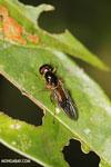 Wasp [madagascar_masoala_0423]