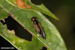 Wasp [madagascar_masoala_0424]