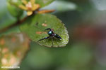 Jumping spider [madagascar_masoala_0516]