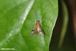Insect [madagascar_masoala_0536]