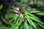 Flowers [madagascar_masoala_0539]