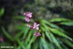 Flowers [madagascar_masoala_0540]