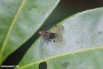 Insect [madagascar_masoala_0589]