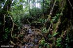 Masoala rainforest [madagascar_masoala_0622]