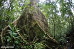 Masoala rainforest [madagascar_masoala_0626]