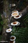 Fungi [madagascar_masoala_0699]