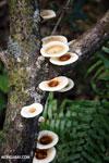 Fungi [madagascar_masoala_0700]