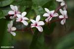Flowers [madagascar_masoala_0804]