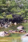 Mangrove wetland on Madagascar's Masoala Peninsula [madagascar_masoala_0870]