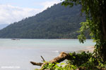 Masoala: where rainforest meets the sea in Madagascar [madagascar_masoala_0900]