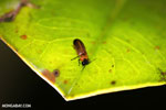 Insect [madagascar_masoala_0923]