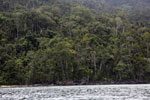 Masoala rainforest [madagascar_masoala_0989]