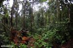 Masoala rain forest