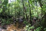 Masoala rain forest [madagascar_masoala_1034]