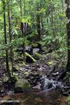 Masoala rain forest [madagascar_masoala_1035]