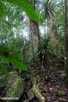 Masoala rain forest [madagascar_masoala_1036]