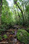 Masoala rain forest [madagascar_masoala_1037]