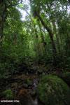 Masoala rain forest [madagascar_masoala_1038]