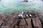 Tampolo Marine Park [madagascar_masoala_1087]